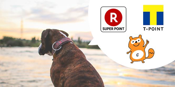 楽天「Rポイントカード」の提供開始 激化する共通ポイントサービスについて